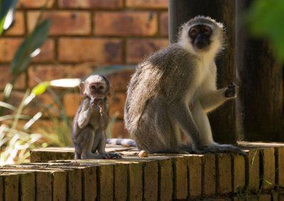 236A Monkeys