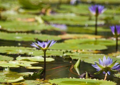 KPL Pond 2